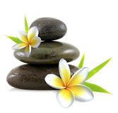 Plumeria flowers spa stones stock image
