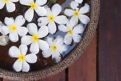 Plumeria flowers Royalty Free Stock Image