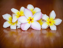Plumeria flowers on wooden background Royalty Free Stock Photos