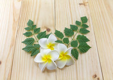 Plumeria flowers. On wooden floor Royalty Free Stock Photo