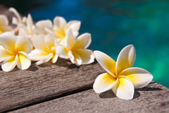 Plumeria flowers on wooden floor, blue water Royalty Free Stock Images