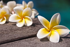Plumeria flowers on wooden floor, blue water Royalty Free Stock Photo