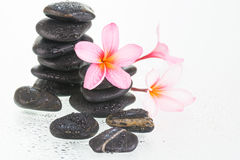 Plumeria flowers and zen stones Royalty Free Stock Photography