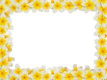 Plumeria Frame Stock Image