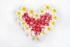 Plumeria Frame heart Royalty Free Stock Images