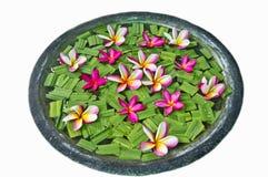 Plumeria Frangipani Flower. Plumeria flower common name Frangipani used in decoration in Thailand Royalty Free Stock Photography