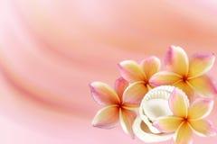 Plumeria (frangipani) flower Royalty Free Stock Photos