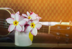 Plumeria or frangipani flowers in cup with ukulele and vinatge b Royalty Free Stock Photo