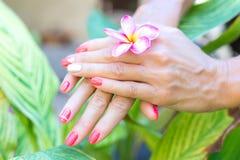 Plumeria frangipani kwiat w kobiety ręce na pięknym natury tle zdjęcie royalty free