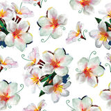 Plumeria or Frangipani pattern seamless background. Plumeria, Frangipani pattern seamless (background) - Asian white flowers stock illustration