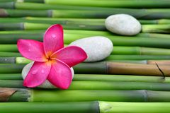 Plumeria on green bamboo Royalty Free Stock Photos