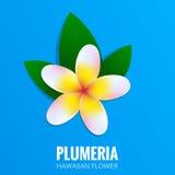Plumeria. Hawaiian flower Frangipani. Tropical flower with leaves. Botanical exotic plant.  Stock Image