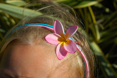 Plumeria head band Stock Photos