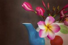 Plumeria hermoso o frangipani de la flor en tetera Fotos de archivo