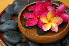 Plumeria In Wooden Bowl Royalty Free Stock Photography