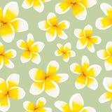 Plumeria inconsútil del amarillo del modelo del fondo floral ilustración del vector