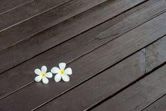 Plumeria kwiat Fotografia Royalty Free