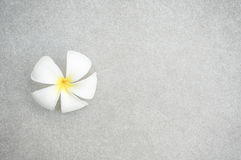 Plumeria kwiat Obraz Royalty Free