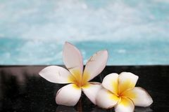 Plumeria kwiat i błękitny pływacki basen pluskotaliśmy wodnego szczegół Obrazy Stock