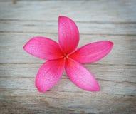 Plumeria kwiat na drewnianej podłoga obrazy royalty free