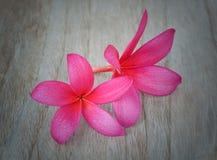 Plumeria kwiat na drewnianym tle zdjęcie royalty free