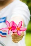 Plumeria kwiat w ręce Zdjęcia Stock