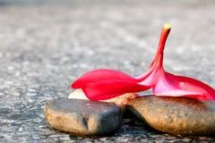 Plumeria kwiatu widoku tło Fotografia Royalty Free