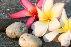 Plumeria kwiatu widoku tło Obraz Royalty Free