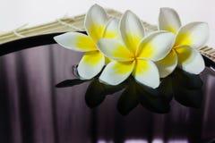 plumeria lub frangipani na wodzie z odbiciem w medytaci w ten sposób Obraz Royalty Free