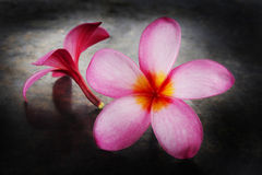 Plumeria on a metal tray Stock Photo