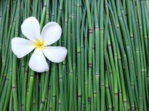Plumeria na zielonym tle Zdjęcie Royalty Free