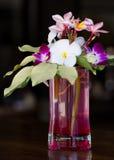 Plumeria och orkidéblomma Fotografering för Bildbyråer