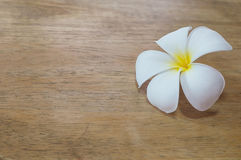 Plumeria. On old wood, vintage style Stock Photography