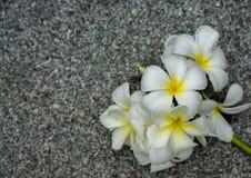 Plumeria op concrete vloer Stock Afbeelding