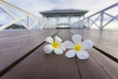 Plumeria op Houten pijler bij Koh Si Chang-eiland Stock Foto's
