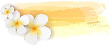 Plumeria op waterverfbanner Stock Fotografie