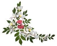 Plumeria ornament Stock Images