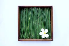 Plumeria på grön bakgrund i ramen Arkivfoton