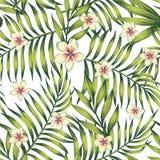 Plumeria palm leaves green seamless pattern Stock Image