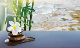 Plumeria on pebble rock with bamboo tree and water surface behin Royalty Free Stock Images