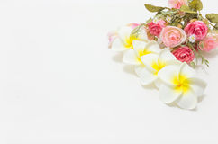 Plumeria with pink and white roses. Background, shallow depth of field. Retro vintage Stock Photos