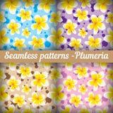 Plumeria Reeks naadloze patronen bloemen Stock Afbeeldingen