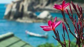 Plumeria rojo vivo del flor Barco de Longtail en la bahía azul en fondo Tailandia, Asia almacen de video
