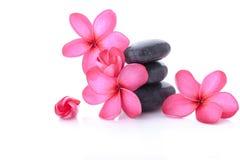 Plumeria rosa luminosa Fotografia Stock