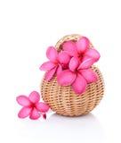 Plumeria rosa luminosa Fotografia Stock Libera da Diritti