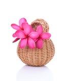 Plumeria rosa luminosa in un canestro del rattan fotografie stock libere da diritti
