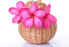 Plumeria rosa luminosa in un canestro del rattan fotografia stock libera da diritti