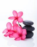 Plumeria rosa luminosa in un canestro del rattan Immagine Stock Libera da Diritti