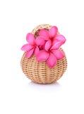 Plumeria rosa in un canestro immagine stock