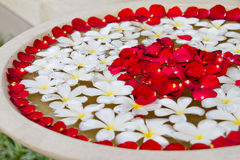 Plumeria and Rose Petals Royalty Free Stock Photography